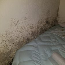 Bedroom, Moldy Walls, Phoenix AZ