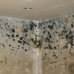 Mold Growth in Flooded Home - Arizona Total Home Restoration Phoenix AZ