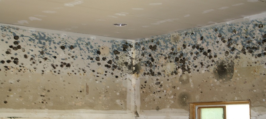 Mold Testing - Mold Growth in Flooded Home - Arizona Total Home Restoration Phoenix AZ