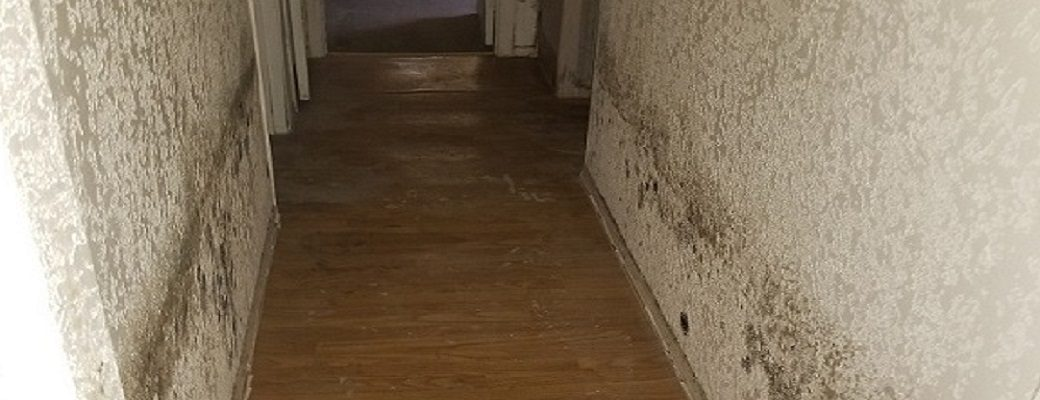 Mold Problems - Black Mold in Hallway of Home - ATH Restoration - Scottsdale AZ