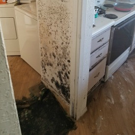AZ Total Home Restoration - Mesa AZ - Mold Remediation in Kitchen