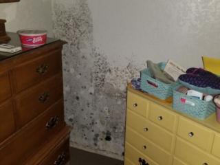 Mold on Bedroom Walls from Water Supply Line Leak - Phoenix, AZ