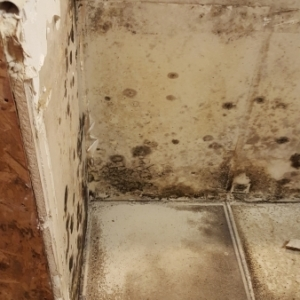 Behind-the-Kitchen-Cabinets-After-CAT3-Black-Water-Damage-Chandler-AZ