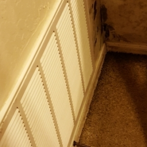 Black-Mold-Growing-on-Walls-Baseboard-and-Furniture-Water-Damage-Restoration-Chandler-AZ