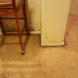 Black-Mold-Growing-on-Walls-and-Furniture-CAT3-Water-Damage-Restoration-and-Mold-Remediation-Chandler-AZ