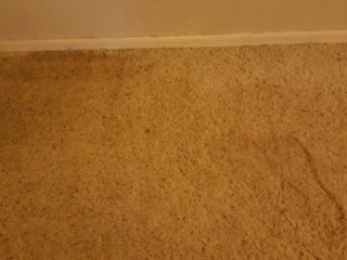 Carpeting-is-Soaked-with-CAT3-Black-Water-After-Sewer-Backup-Chandler-AZ-Water-Damage-Restoration