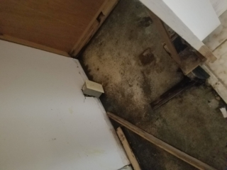 BEFORE: Note Black Mold Growth due to Water Damage in the Kitchen - Chandler, AZ