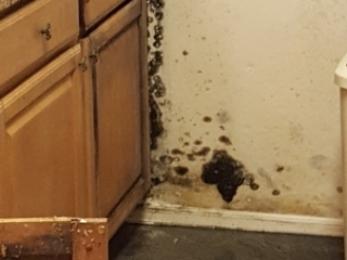 Flooded-Kitchen-Standing-CAT3-Water-and-Black-Mold-Water-Damage-Repair-and-Mold-Removal-Chandler-AZ