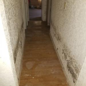Leak-Hallway-Mold-Subfloor-Damage-Phoenix-AZ