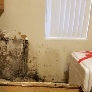 Mold-Behind-Dishwasher-After-Kitchen-Sewage-Backup-Flooded-Entire-Home-Chandler-AZ