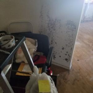 Mold, Walls, Drywall, Office, Phoenix Arizona