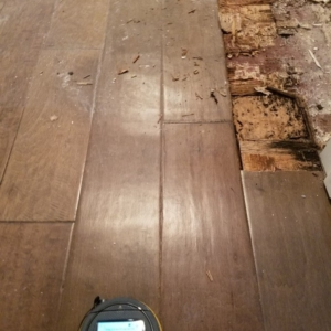 Wet-Wood-Floor-Mold-Damage-Remediation-Phoenix-Arizona